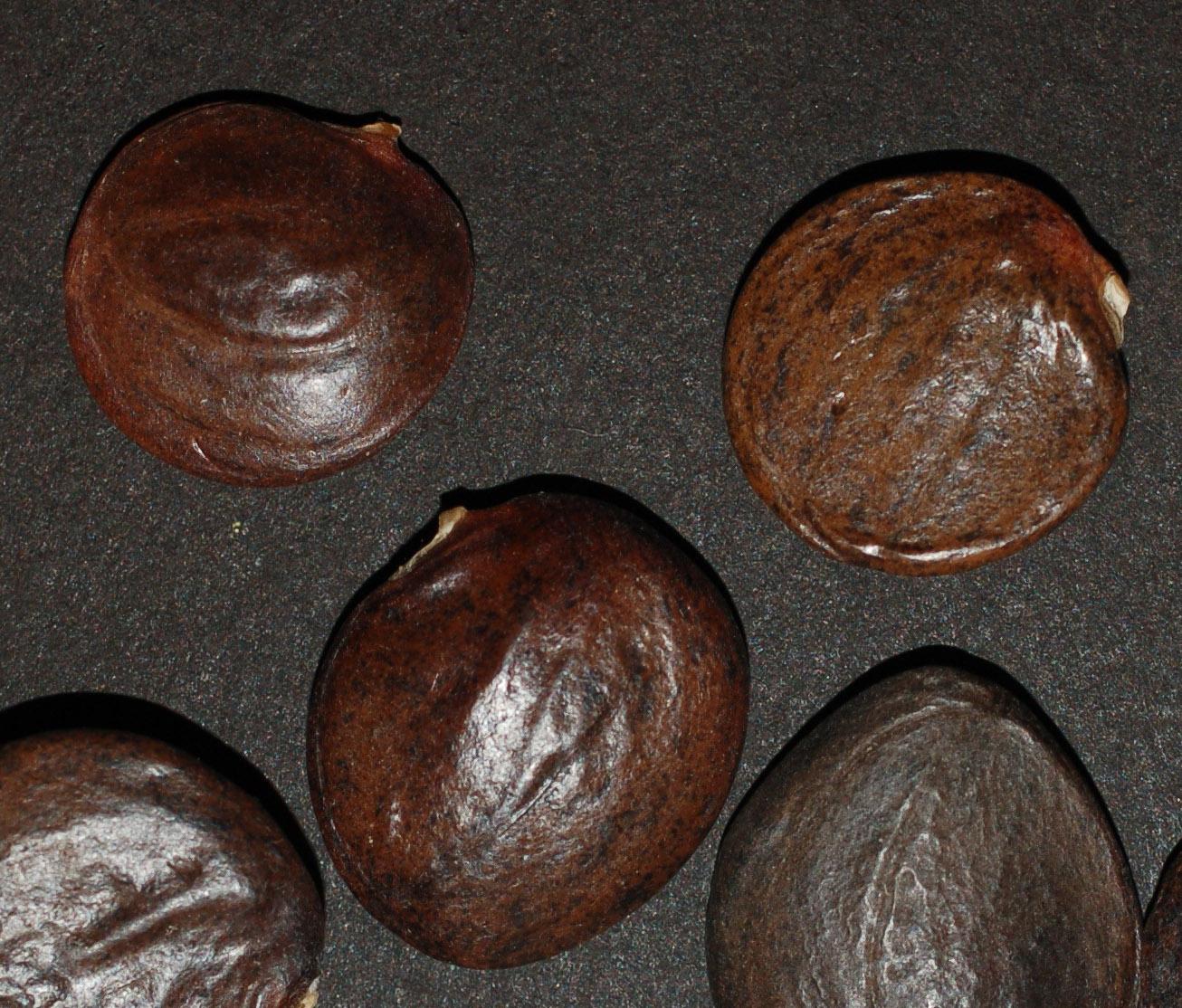 Wistsine seed1 crop