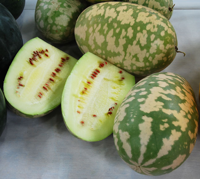 citron_watermelon